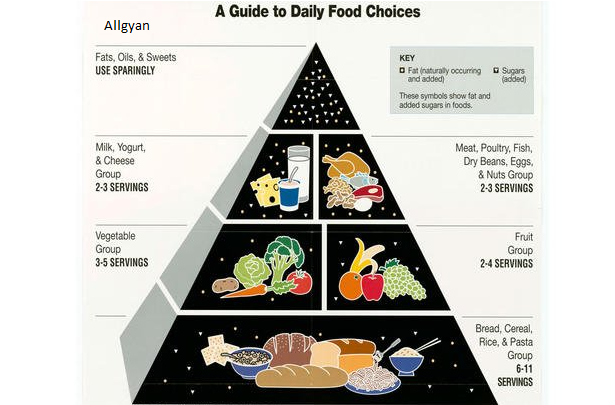 food-pyramid-allgyan